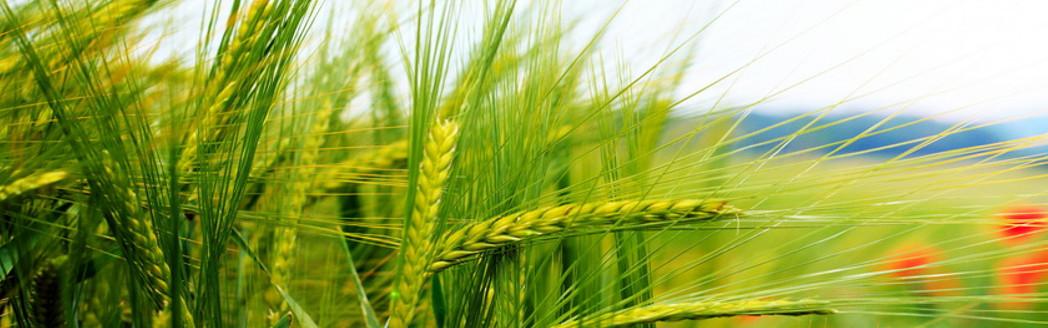 Tarım Arazileri Büyük Şirketler Tarafından Çiftçiden Alınıyor